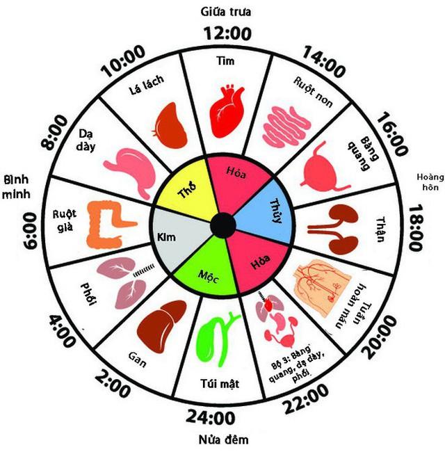 Thường tỉnh giấc vào khung giờ này trong đêm, bạn biết ngay gan, phổi, mật... đang hỏng - Ảnh 1.