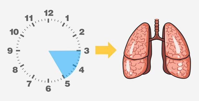 Thường tỉnh giấc vào khung giờ này trong đêm, bạn biết ngay gan, phổi, mật... đang hỏng - Ảnh 5.