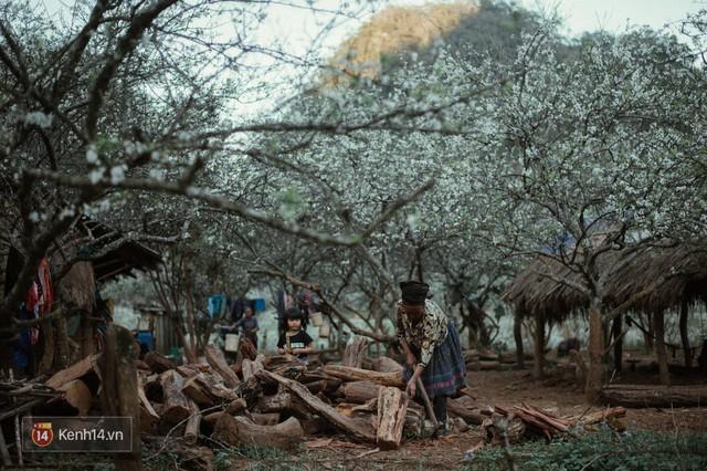 Những ngày cận Tết, hoa mận trắng nở rộ Mộc Châu đẹp đến mê mẩn - Ảnh 12.