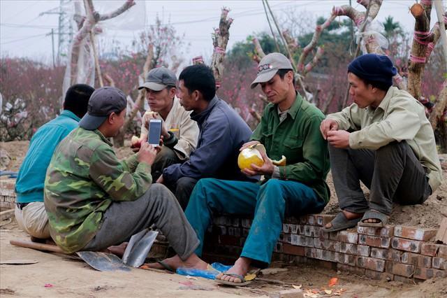 Nông dân đi đánh gốc đào thuê: Mỗi ngày kiếm tiền triệu - Ảnh 9.