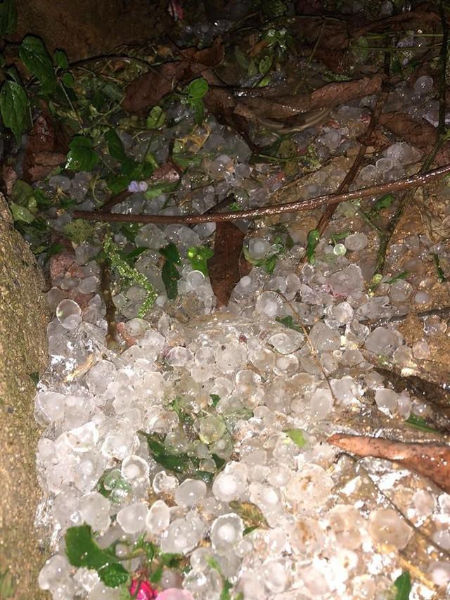 Clip gây xôn xao: Cơn dông trút theo mưa đá trắng trời ở Mộc Châu - Ảnh 2.