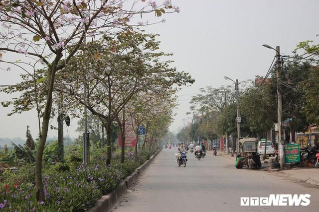 Ảnh: Chiêm ngưỡng hoa ban Tây Bắc nhuộm trắng con đường ven đô Hà Nội - Ảnh 3.