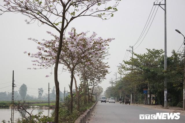 Ảnh: Chiêm ngưỡng hoa ban Tây Bắc nhuộm trắng con đường ven đô Hà Nội - Ảnh 9.