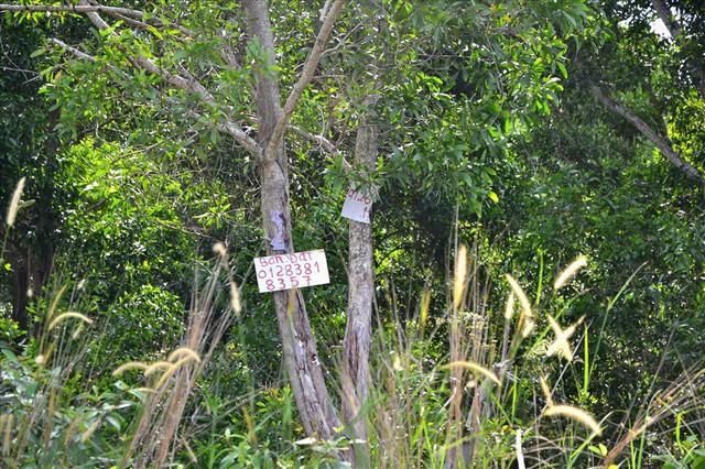 Chùm ảnh: Muôn kiểu rao phân phối ở chợ đất khổng lồ Phú Quốc - Ảnh 7.