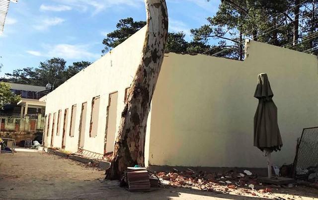 Phù phép pháp lý, qua mặt Sở Xây dựng để cất nhà trong villa cổ - Ảnh 1.