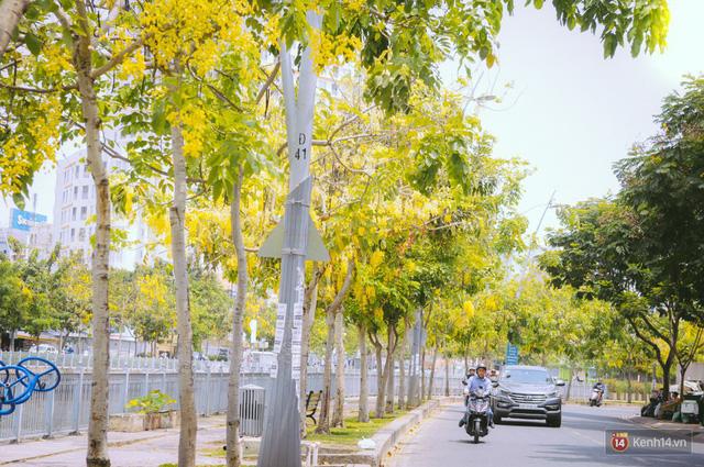 Chùm ảnh: Hoa Osaka rực rỡ nhuộm vàng đường phố Sài Gòn trong cái nắng tháng 4 - Ảnh 4.