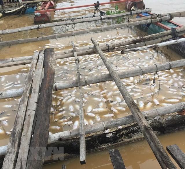 [Photo] Cận cảnh cá chết nổi trắng sông La Ngà ở Đồng Nai - Ảnh 5.