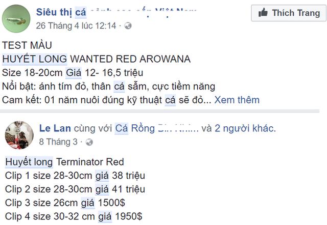 Cá rồng huyết long có gì đặc biệt khiến đại gia Hà Nội chi bạc triệu mua về nuôi chơi? - Ảnh 2.