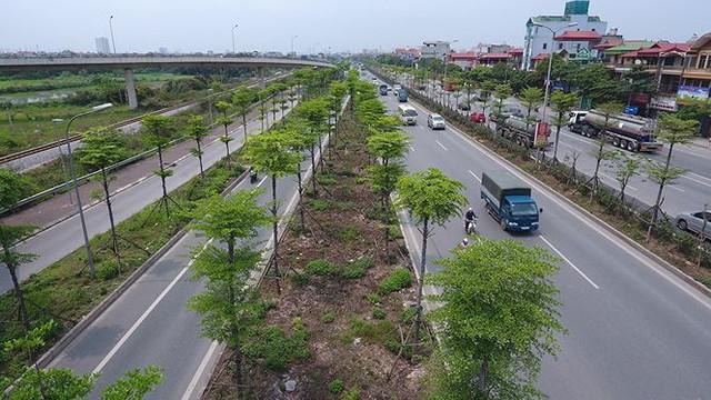 Những hàng cây xanh mướt thẳng tắp ở đầu cầu Thanh Trì - Ảnh 14.