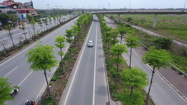 Những hàng cây xanh mướt thẳng tắp ở đầu cầu Thanh Trì - Ảnh 7.