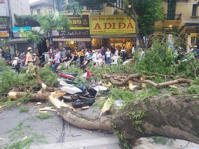 Cây cổ thụ bật gốc đè xe máy trên phố Hà Nội, 5 người bị thương - Ảnh 2.