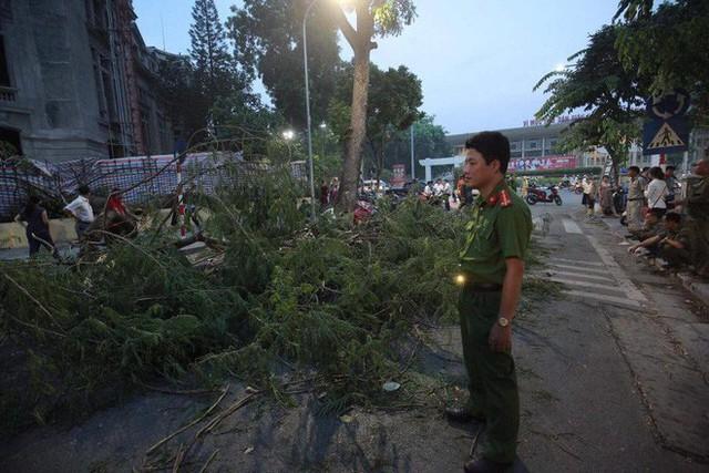 Cây cổ thụ bật gốc đè xe máy trên phố Hà Nội, 5 người bị thương - Ảnh 8.