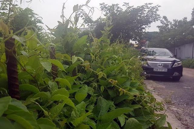 Kiểm tra bãi xe lậu trên khu đất 10.000m2 giữa Thủ đô - Ảnh 5.