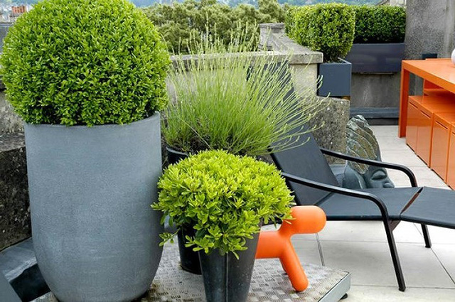 Ý tưởng thiết kế vườn trên sân thượng tuyệt đẹp - Ảnh 5.
