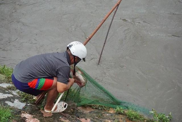 Người Hà Nội đổ xô ra sông bắt cá sau cơn mưa - Ảnh 1.