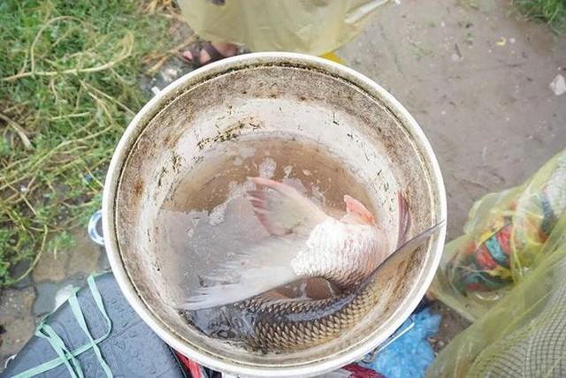 Người Hà Nội đổ xô ra sông bắt cá sau cơn mưa - Ảnh 5.