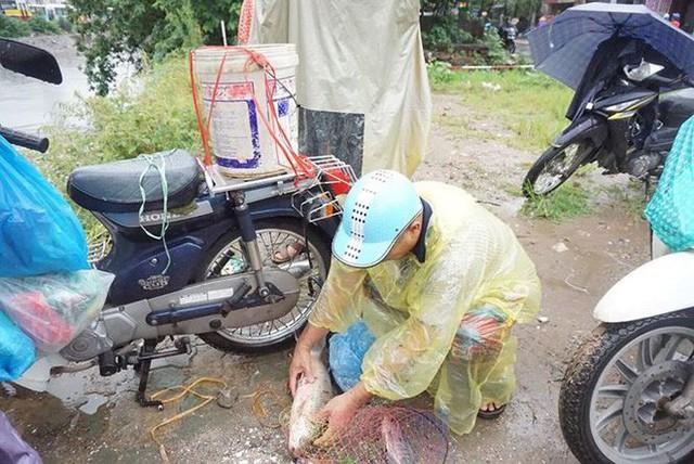 Người Hà Nội đổ xô ra sông bắt cá sau cơn mưa - Ảnh 6.