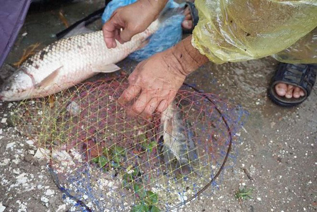 Người Hà Nội đổ xô ra sông bắt cá sau cơn mưa - Ảnh 7.
