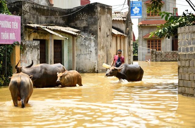 Sau 1 tuần mưa, người Hà Nội dùng thuyền tự chế, bơi trong dòng nước ngập ao bèo về nhà - Ảnh 10.