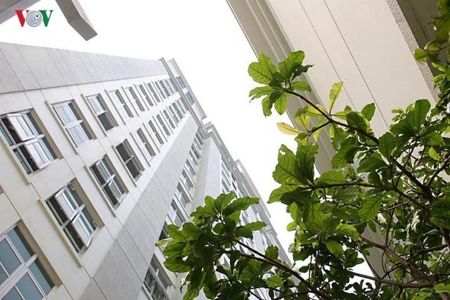 Căn hộ tầng 7 tận dụng dao động không làm vườn treo - Ảnh 12.