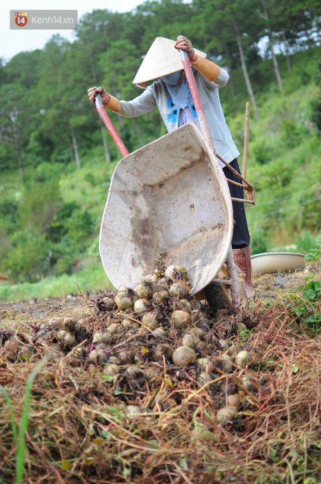 Nông dân khốn khổ vì nông sản Trung Quốc nhái hàng Đà Lạt: 3 tháng trồng khoai không bán được đồng nào, chỉ biết khóc... - Ảnh 1.