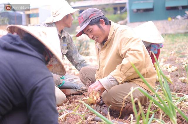 Nông dân khốn khổ vì nông sản Trung Quốc nhái hàng Đà Lạt: 3 tháng trồng khoai không bán được đồng nào, chỉ biết khóc... - Ảnh 3.