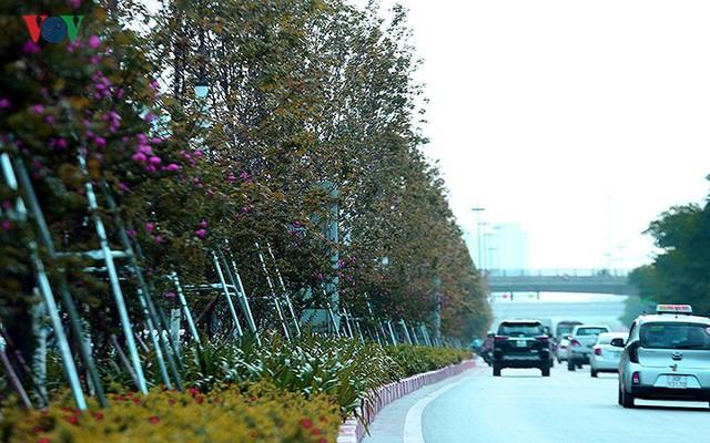 Những hàng cây Phong trên đường phố Hà Nội ngả màu khi Thu sang - Ảnh 2.