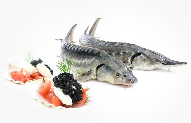 Hạt ngọc trai của biển cả: Món ăn xa xỉ chỉ dành cho giới đại gia - Ảnh 3.