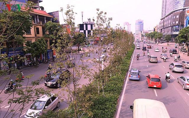 Những hàng cây Phong trên đường phố Hà Nội ngả màu khi Thu sang - Ảnh 5.
