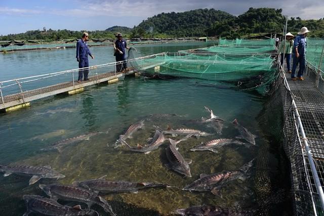 Hạt ngọc trai của biển cả: Món ăn xa xỉ chỉ dành cho giới đại gia - Ảnh 10.