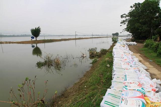 Hà Nội: Nước sông Bùi rút sâu, người dân ra đê câu cá  - Ảnh 2.