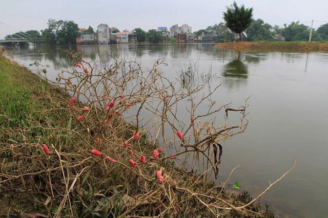 Hà Nội: Nước sông Bùi rút sâu, người dân ra đê câu cá  - Ảnh 7.