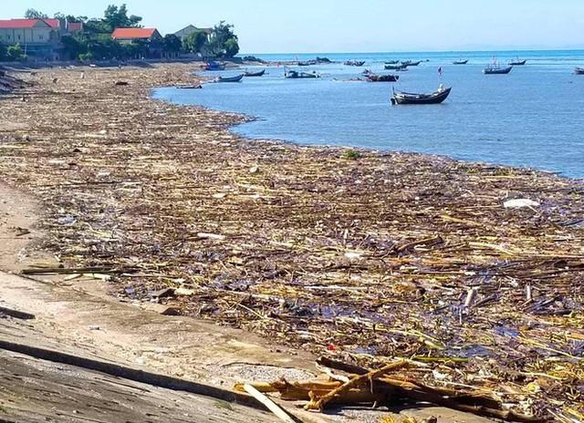 Bờ biển tràn ngập gỗ, củi và rác sau 1 đêm - Ảnh 2.