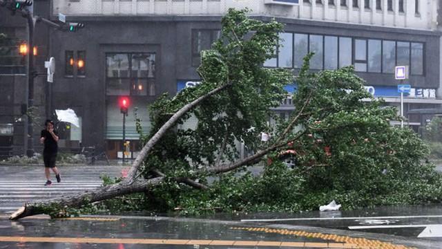 Hình ảnh: Nhật Bản hoang tàn, đổ nát sau liên tiếp siêu bão Jebi và động đất 6 độ Richter ở Hokkaido - Ảnh 17.