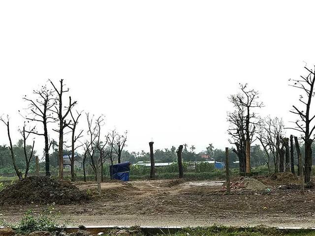 Hải Phòng: Đua nhau san lấp đất nông nghiệp ven đường - Ảnh 1.