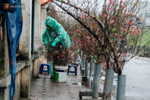 Chùm ảnh: Hoa đào đã nở đỏ rực trên những tuyến phố Hà Nội, Tết đã đến rất gần rồi! - Ảnh 13.