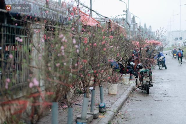 Chùm ảnh: Hoa đào đã nở đỏ rực trên những tuyến phố Hà Nội, Tết đã đến rất gần rồi! - Ảnh 8.