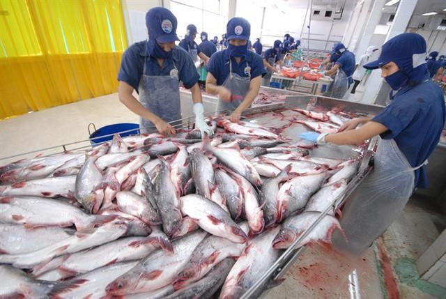 Giá cá tra cao chót vót ngay đầu năm - Ảnh 1.