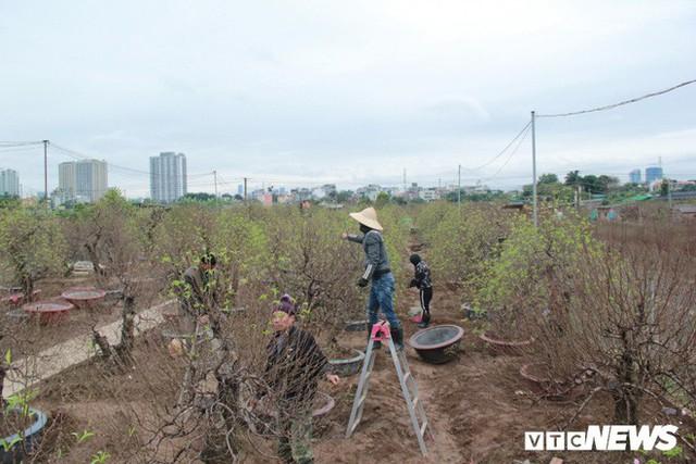 Dân làng Nhật Tân xây phòng riêng, lắp điều hòa cho đào bung nở đúng dịp Tết Nguyên đán - Ảnh 3.