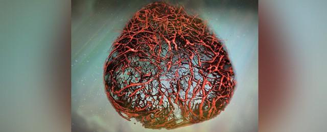 Lần đầu tiên nuôi thành công mạch máu người: cuộc cách mạng lớn với hàng triệu người đã xuất hiện - Ảnh 2.
