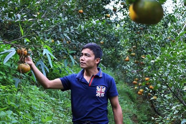 Những rừng cam thu tiền tỷ mỗi dịp Tết ở Hà Tĩnh - Ảnh 1.