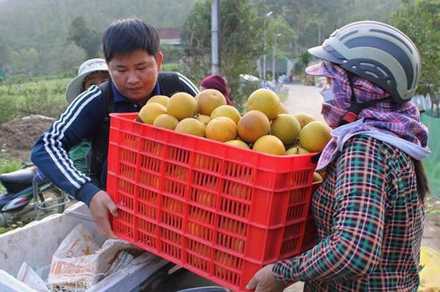 Những rừng cam thu tiền tỷ mỗi dịp Tết ở Hà Tĩnh - Ảnh 16.