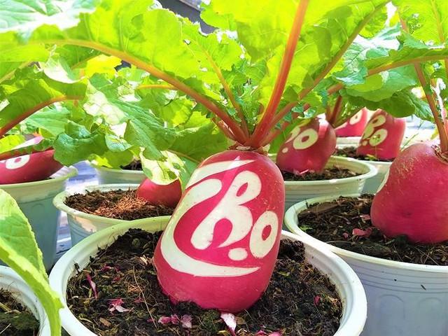 Củ cải hồng phát độc đáo chưng Tết ở Bến Tre - Ảnh 3.