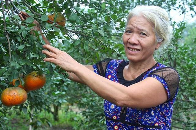 Những rừng cam thu tiền tỷ mỗi dịp Tết ở Hà Tĩnh - Ảnh 7.