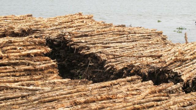 Chuyên gia nói về chung cư nghiêng 45 cm: Làm móng với cây cừ tràm 2-3 m là ăn gian  - Ảnh 2.