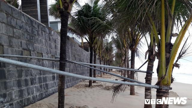 Ảnh: Mang sắt thép quây chằng chịt cả trăm cây dừa ven bãi biển hấp dẫn nhất hành tinh - Ảnh 3.