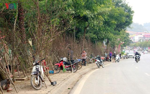 Nhộn nhịp bán mua đào rừng đón Tết ở Sơn La - Ảnh 2.