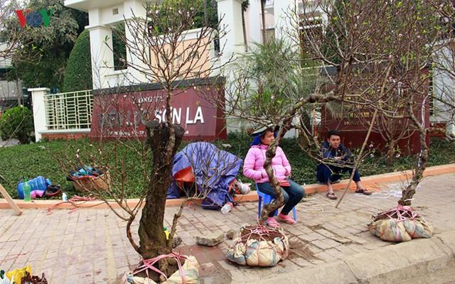 Nhộn nhịp bán mua đào rừng đón Tết ở Sơn La - Ảnh 17.