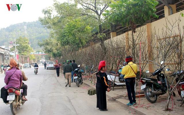 Nhộn nhịp bán mua đào rừng đón Tết ở Sơn La - Ảnh 4.
