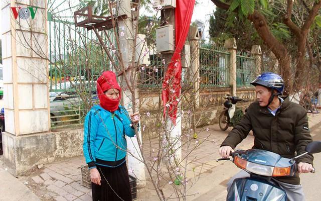 Nhộn nhịp bán mua đào rừng đón Tết ở Sơn La - Ảnh 10.